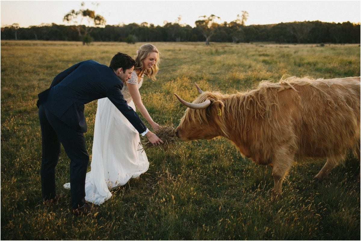 A newly married couple pat a highland cow at their Aghadoe Estate wedding