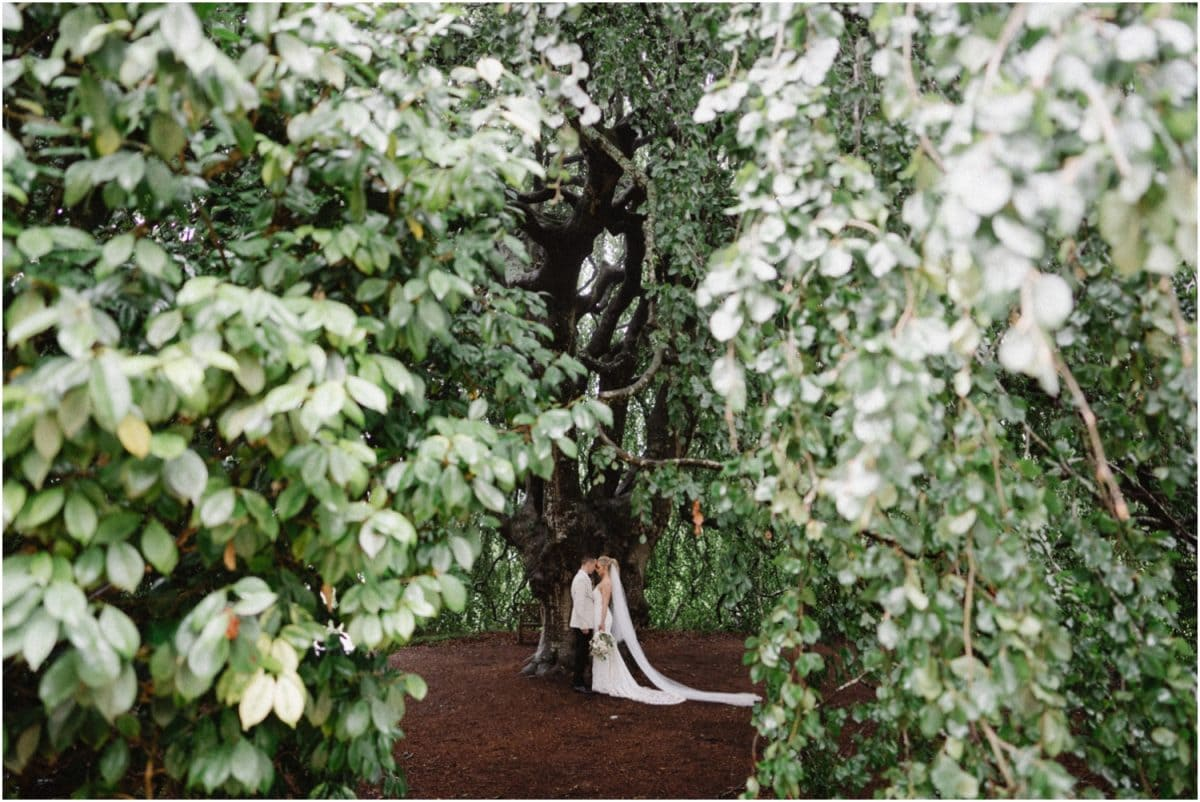 A newly married couple stand under a huge tree at their Milton Park wedding